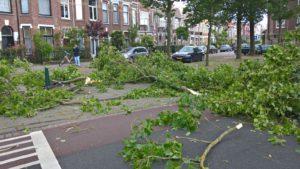 Boetzelaerlaan, Den Haag, Bomenwacht Nederland, populieren